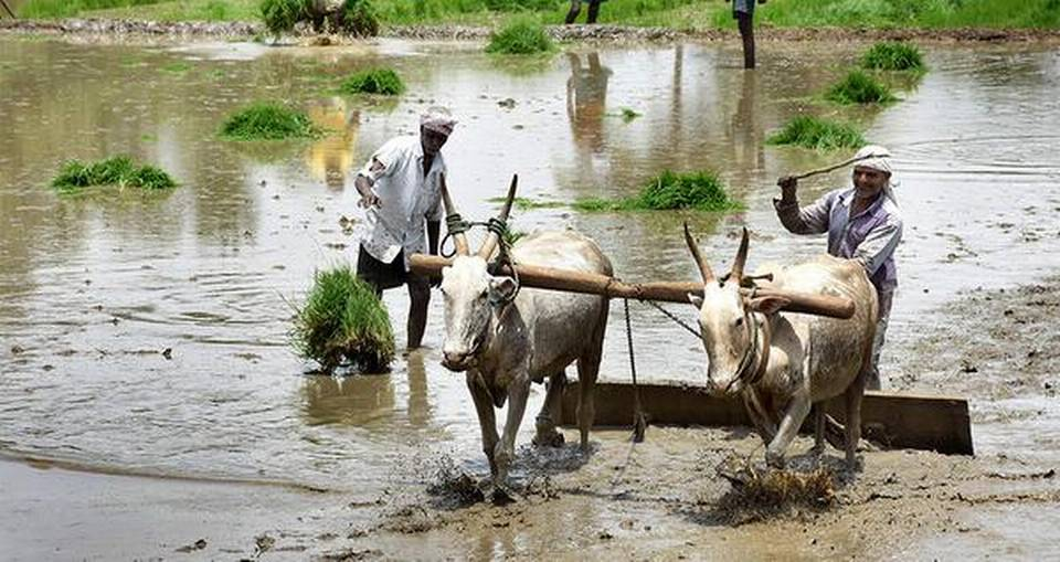 policy-bias-against-rainfed-agriculture