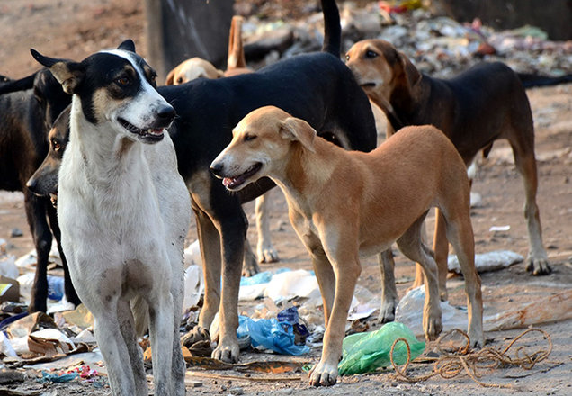 kerala-proposes-stray-dog-zoos